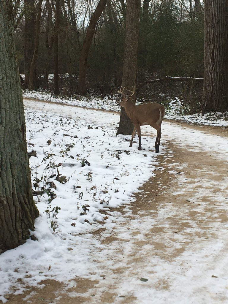 a deer that hearing aid user Ashley saw while running